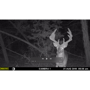 Moultrie A700I Records HD Video