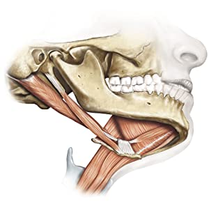 Sobotta - Odontologia