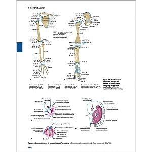 Sobotta - Anatomia macroscópica