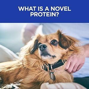 novel protein dog canine