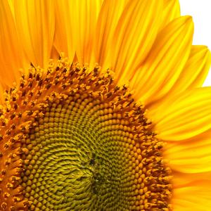 Andalou Naturals brightening skincare sunflower oil