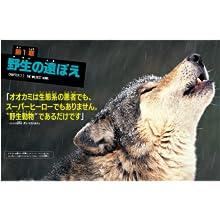 オオカミ ナショジオ 狼 ココリコ 田中 田中直樹 ナショナルジオグラフィック ナショナル ジオグラフィック 児童書 絶滅危惧種 どうぶつ 動物