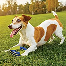 Jack Russell Terrier playing with a zeus disc toy in an open field with tree-line in the background