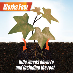 Works fast kills weeds down to and including the root