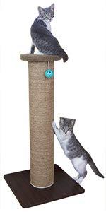 cat post