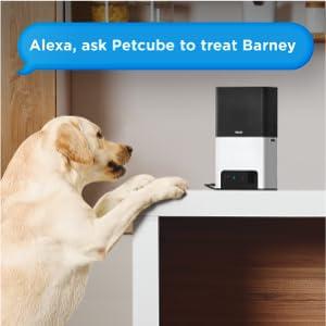 Petcube Bites 2 pet camera with treat dispenser Alexa built-in voice control