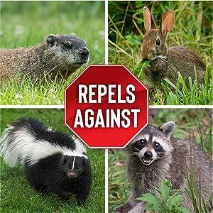 Repels against rabbits skunks groundhogs racoons