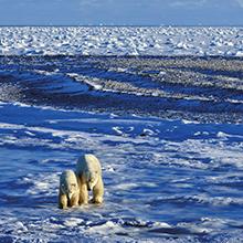 北極スマイル・南極スマイル カレンダー 2020 2月