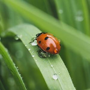 lady bug on a piece of grass