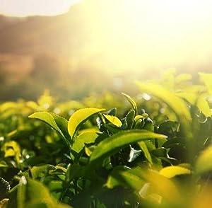 The Story Behind Lipton's Black Tea