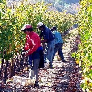 品種の特長を最大限に引き出したワイン造り