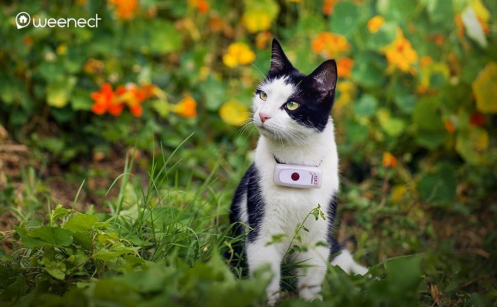 collare gps gatto,gps gatti,gps gatto,gps per gatti,collare gatto gps,localizzatore gatto