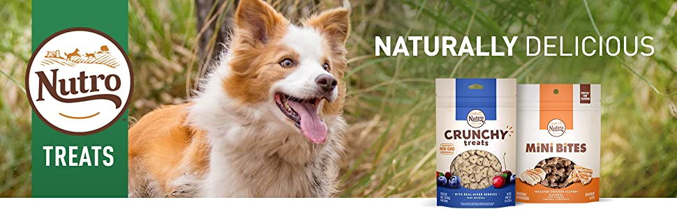 Nutro Dog Treats, Dog Treats for Small Dogs, Dog Treats for Large Dogs, Small Breed Dog Treats
