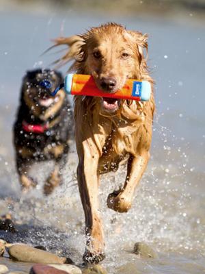 Pet Supplies : Pet Chew Toys : Chuckit! Amphibious Bumper