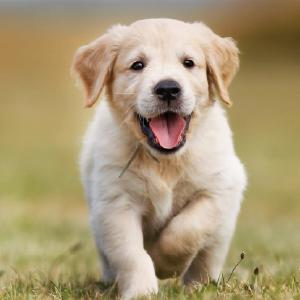 puppy, puppy treat