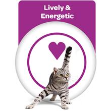 Cat Energy