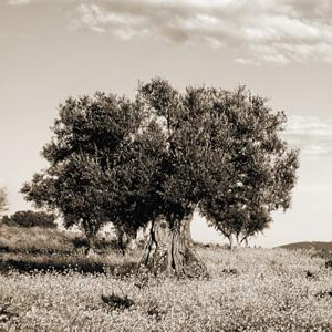 Environmental Stewardship natuzzi