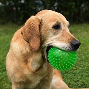 "Pet Supplies : Pet Squeak Toys : Gnawsome 4.5"" Spiky"