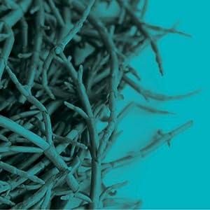 Contains Rosemary, Sea Fennel, Sea Buckthorn, & Maritime Pine