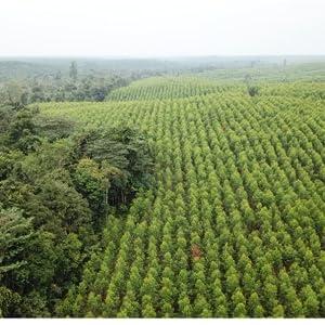 植林、インドネシア、PEFC森林認証