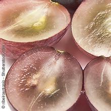 manako OPC Pulver oder Kapseln von Makana - Trauben