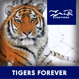 Proud Sponsor of Tigers Forever