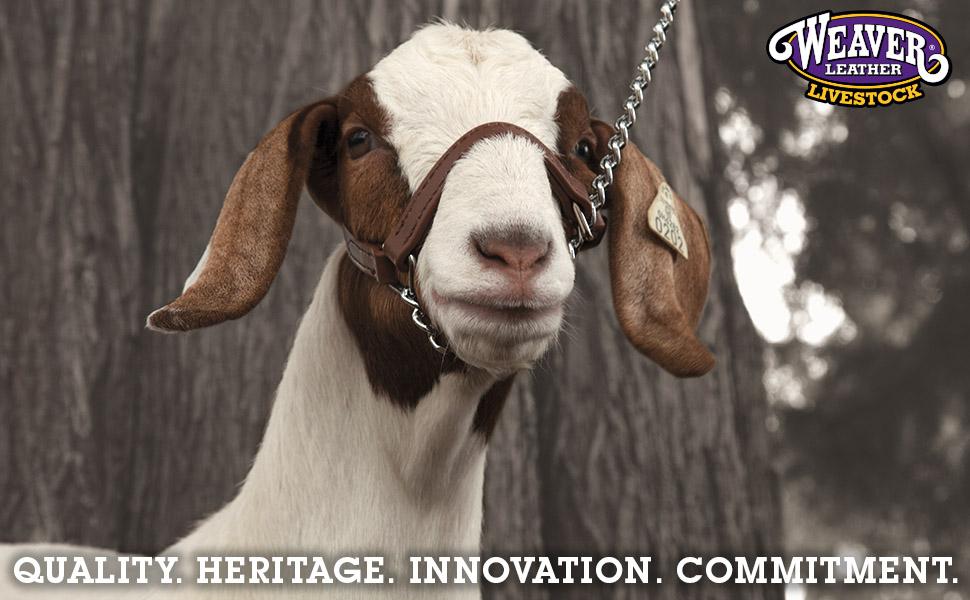 Weaver Leather Livestock Brahma Webb Goat Halter Brown Small NEW