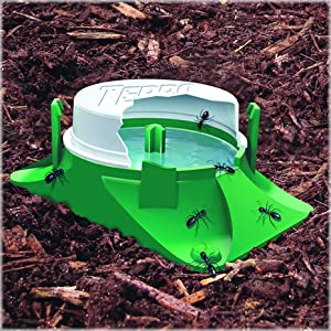 ants, ant bait, ant infestations, terro, terro ant killer, insect control, kill bugs