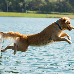 dog waterproof, dog collar size