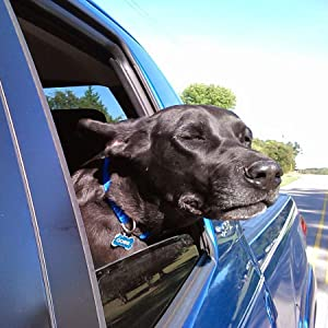 Dog sticking his head out the window of a moving truck