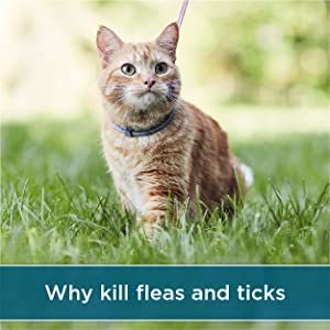 Why kill fleas and ticks