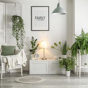 Live plants, houseplants, pothos, monstera, real plants, indoor plants, easy care