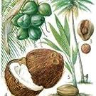 Kokosuss