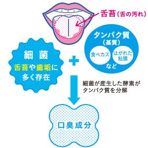 健常人の口臭発生の主要因は舌苔