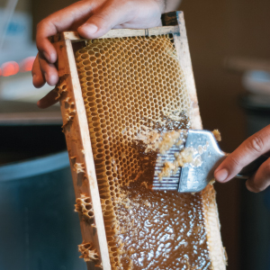 beekeeping, bee keeping book for beginners, bee, bee book, bee gifts, bee keeper, bee keeping