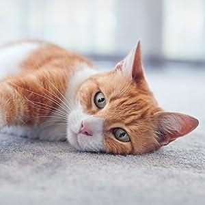 animonda Integra Protect Intestinal para gatos, comida ...