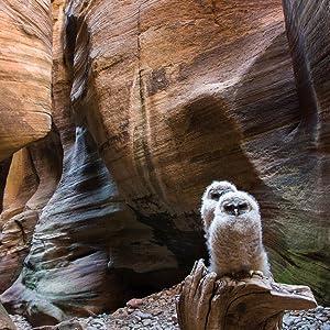 slot canyons zion national park pine creek canyon