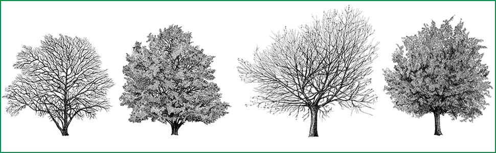 four quill-pen illustrations of trees