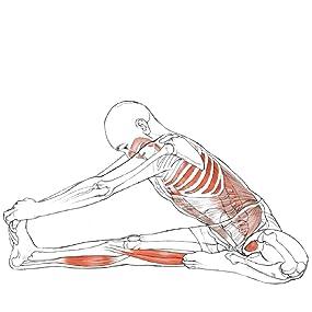 Yoga, anatomy, leslie kaminoff, kaminoff