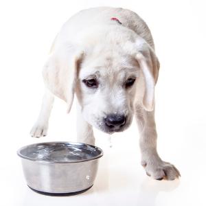 dog water bowl drip messy
