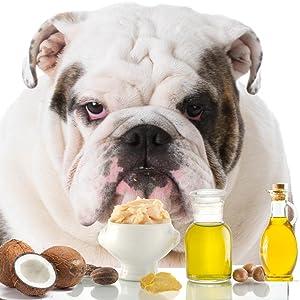 bulldog nose care