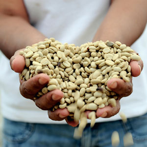 illy has developed direct partnerships with coffee growers to ensure coffee of the highest quality