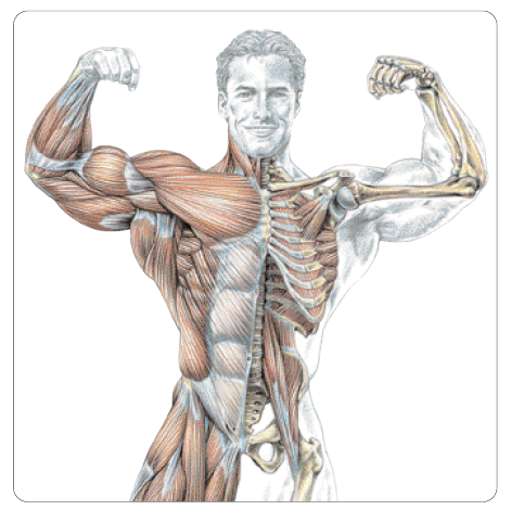 Strength training anatomy workout the frederic delavier michael view larger fandeluxe Images