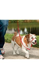 犬 引っ張り防止 イージーウォーク ヘッドカラー ジェントルリーダー