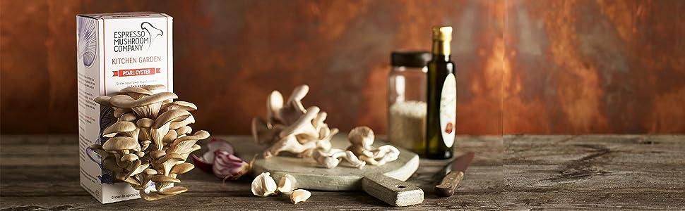 oyster mushroom kit instructions
