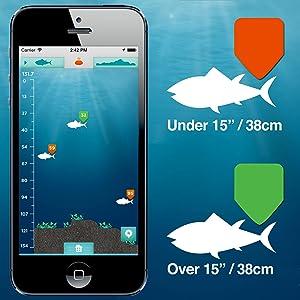 beaucoup de poissons en ligne de rencontres connexion