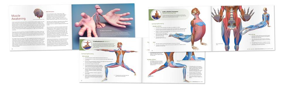 The Key Poses of Yoga: Scientific Keys, Volume II: Ray Long ...