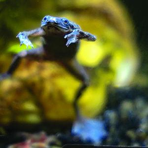 African Dwarf Frogs API brand