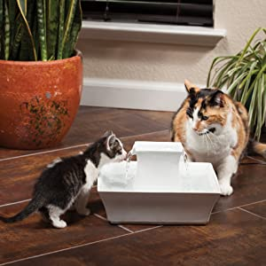fresh filtered water dogs cats pets
