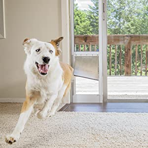 bear running through a petsafe freedom patio panel pet door